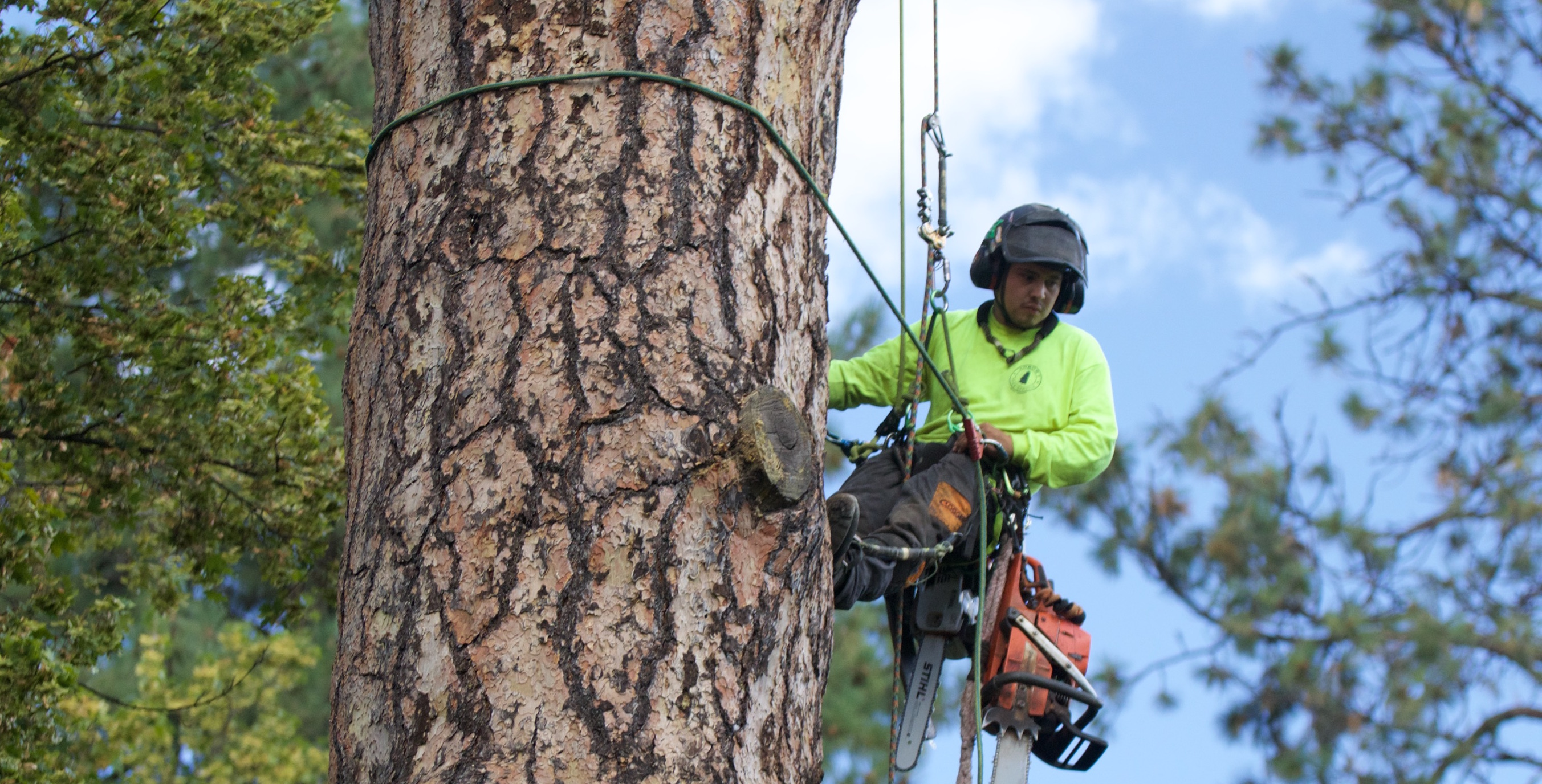 Arbor 1 Tree Service Is Your Source For All Of Bend Oregon Care Needs We Have Five Isa Certified Arborists On Staff To Help You Determine