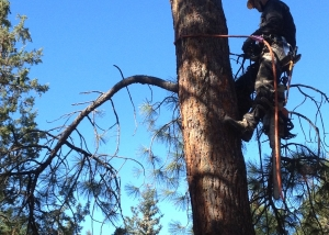 tree removal bend oregon