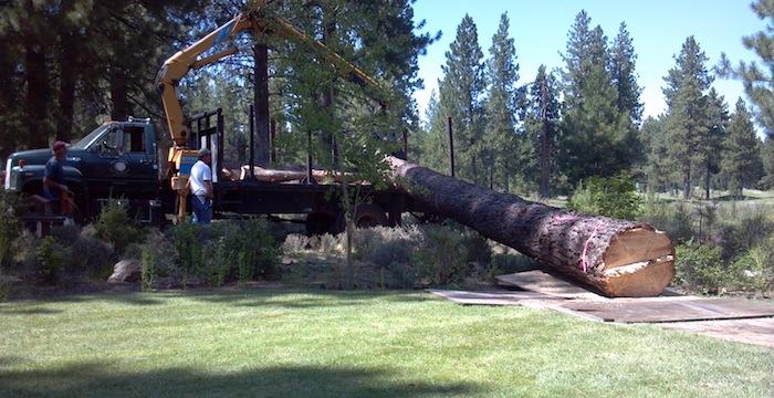 Pine Tree Removal Bend Oregon