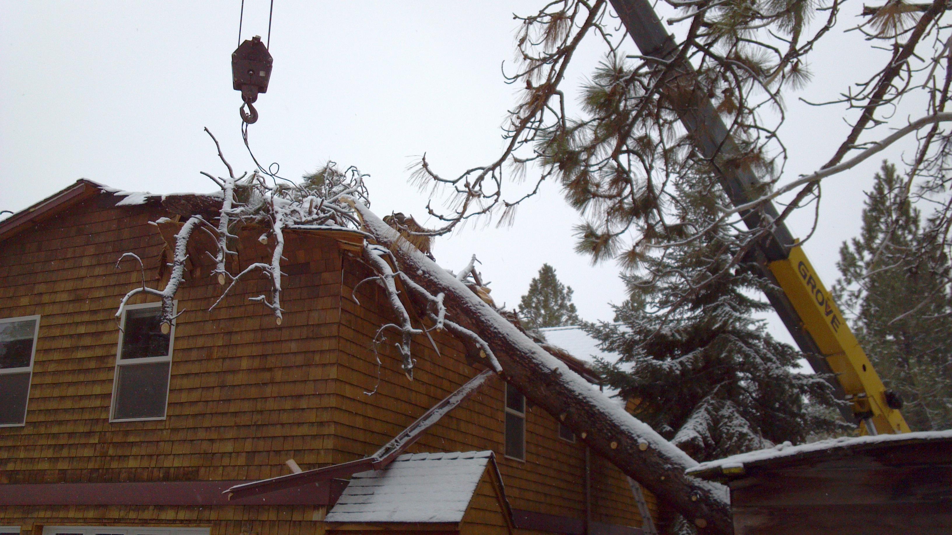 storm damaged trees bend oregon