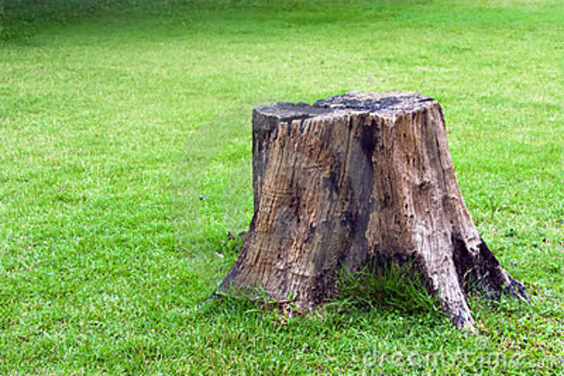 stump in lawn