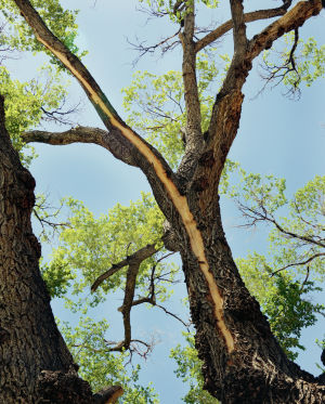 central oregon arborist