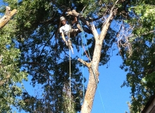 removal of elm trees bend oregon