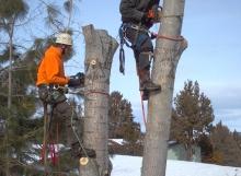 winter tree removal central Oregon