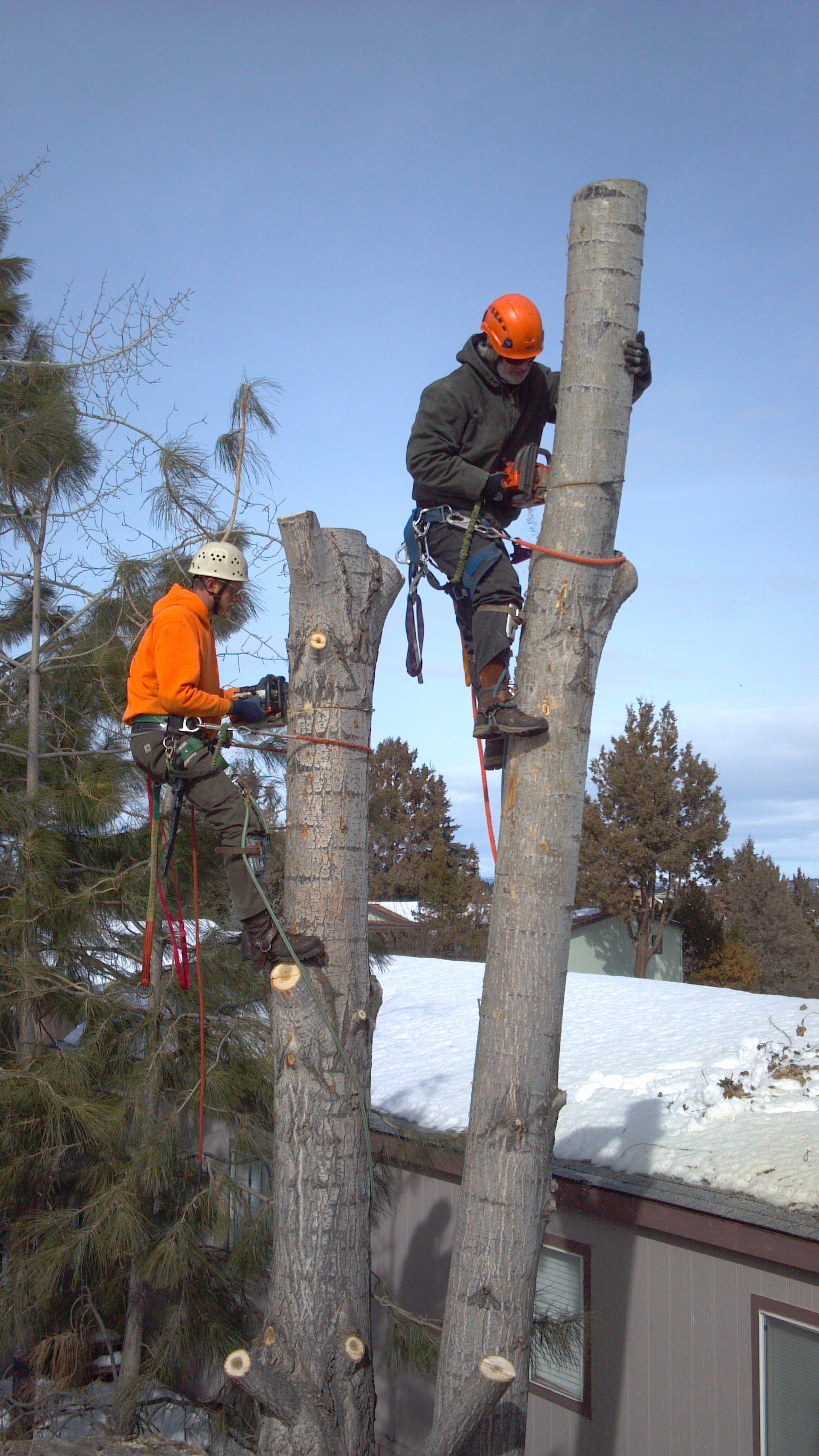 winter tree removal central Oregon