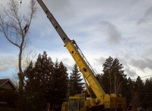 tree removal with crane in Bend, Oregon