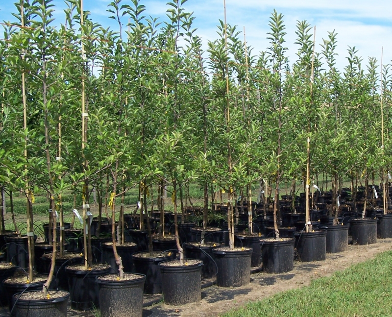 Selecting good trees in Bend Oregon