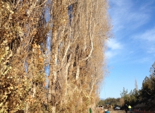 terrebonne arborist