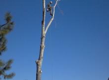 remove a tree