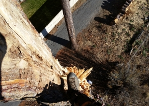 wind damage tree work