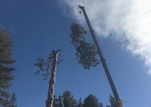 remove pine tree bend oregon