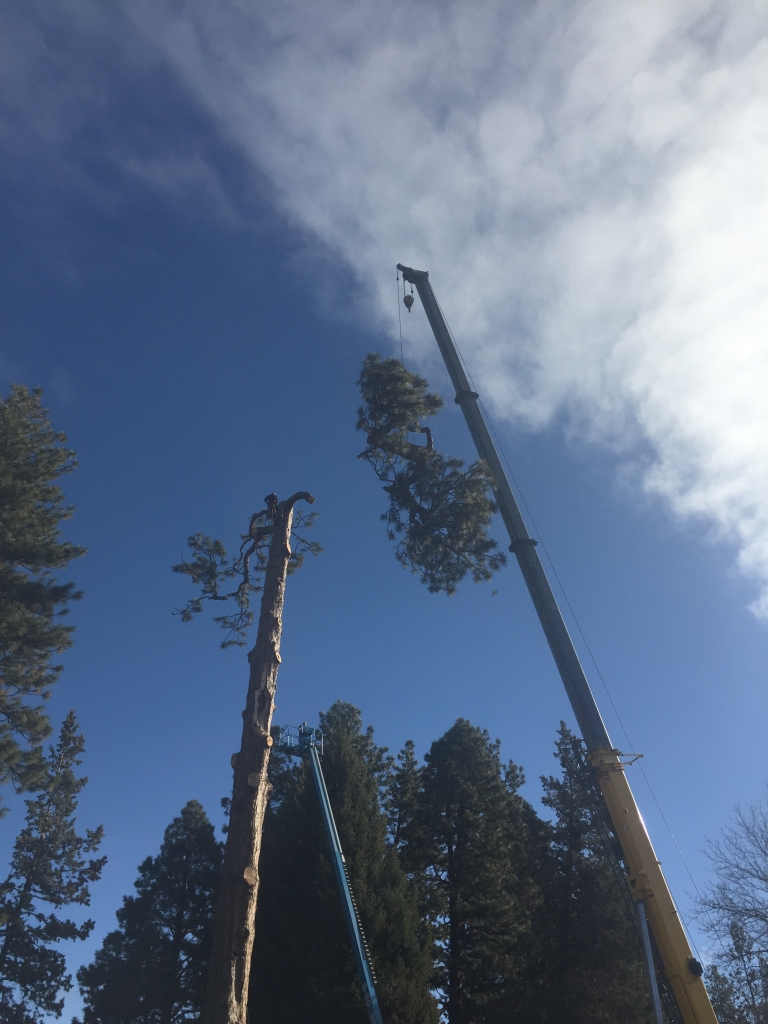 remove pine tree bend oregon