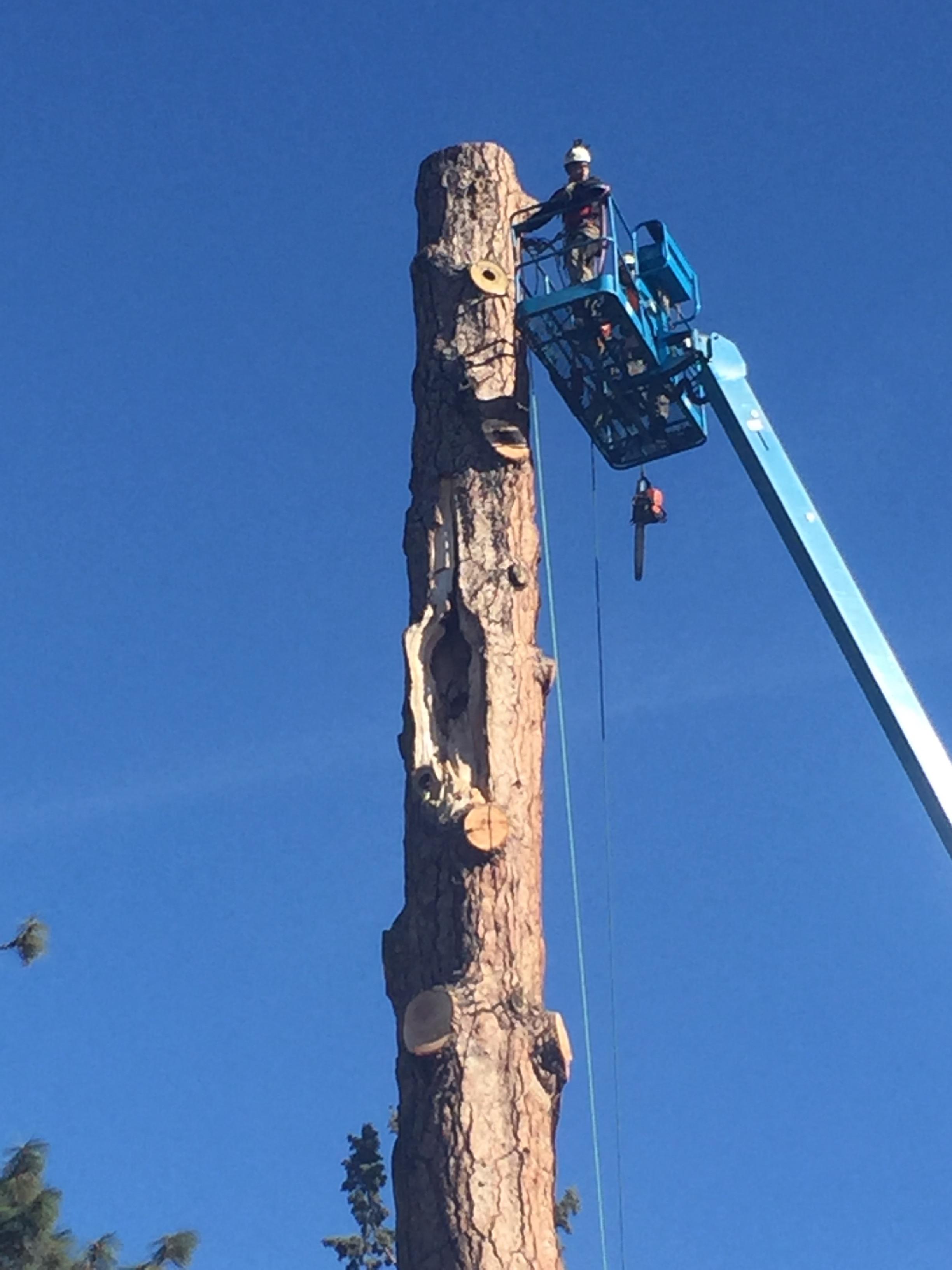 drake park tree removal
