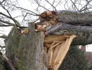tree risk assessment bend oregon