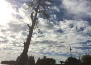 juniper removal central oregon