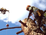 pine tree removal bend oregon