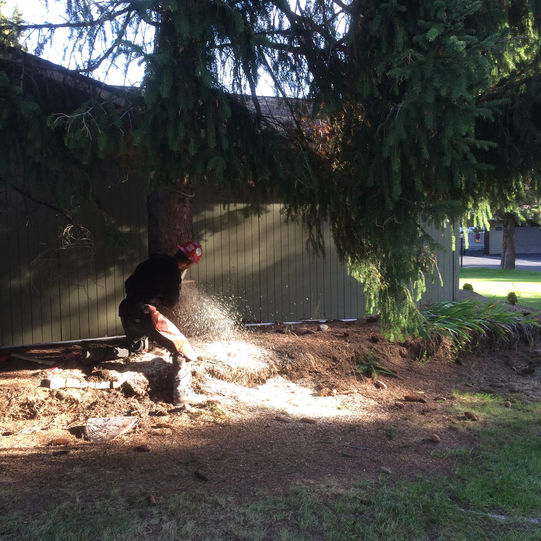 spruce removal bend oregon