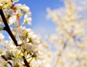 spring tree care in bend, oregon