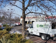 tree care for commercial properties